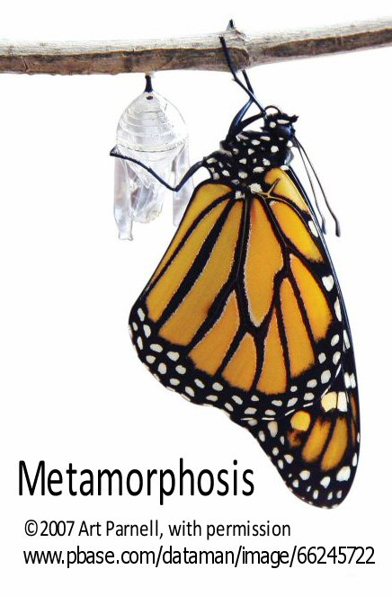Metamorphosis-blog